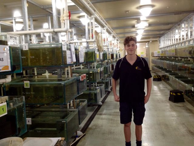 Work experience - Michael